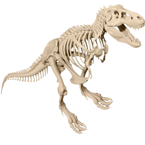 T-Rex-skeleton-dinasaur-model